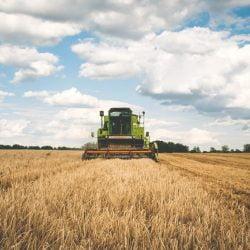 Penjelasan Agrikultur: Pengertian, Sektor dan Contohnya